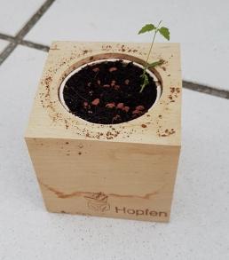 Eco Cube 5