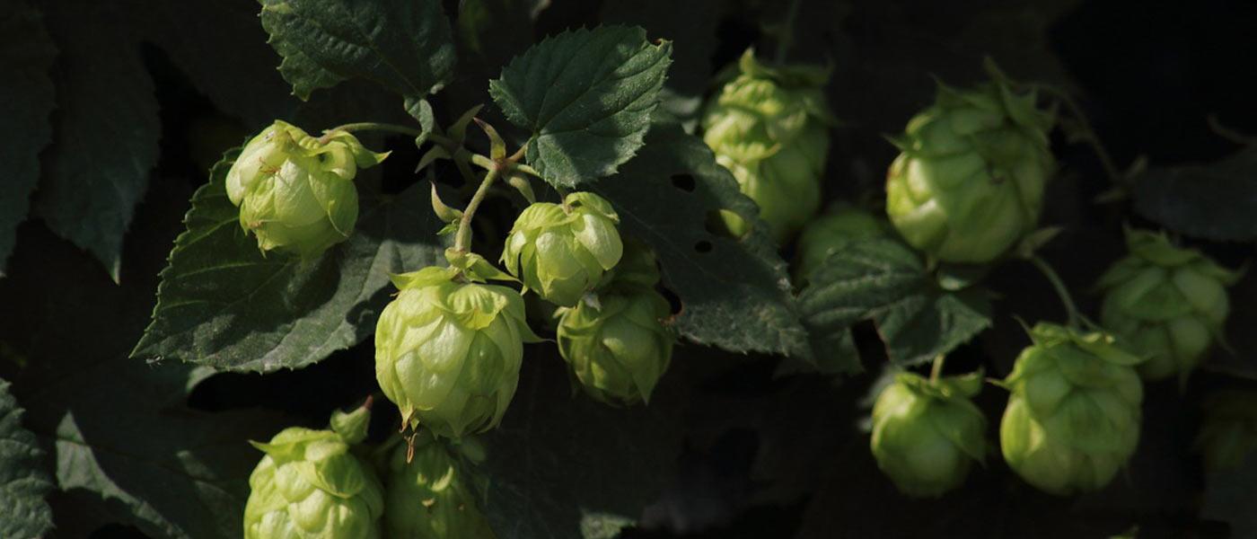 Bier wird UNESCO Weltkulturerbe